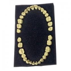 Juego completo de dientes de adulto Frasaco para AG-3